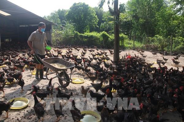 Đảm bảo đủ sản lượng nông sản cho nhu cầu tiêu dùng trong dài hạn