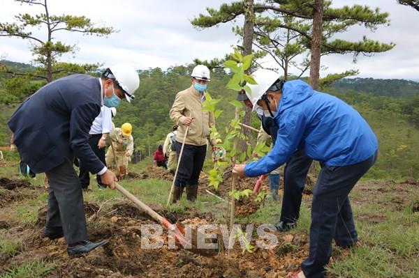 Hoàn thành chương trình trồng 5.000 cây Mai anh đào tại Đà Lạt