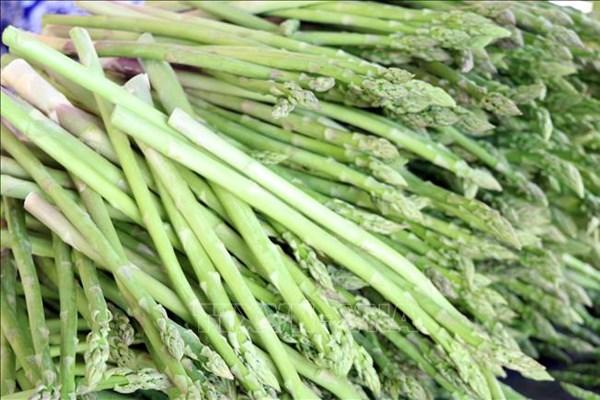 Măng tây Ninh Thuận có sức hút từ thị trường tiêu thụ