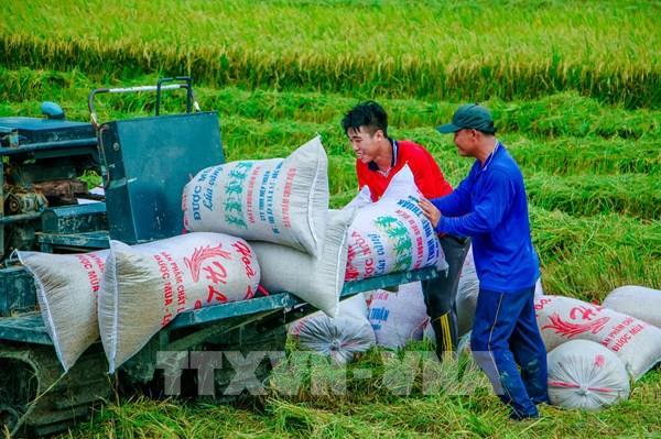Chuyển đổi số nông nghiệp Việt Nam: Phát huy vai trò trụ đỡ của nền kinh tế