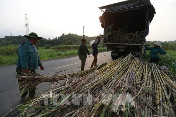 Kiến nghị đấu giá hạn ngạch thuế quan nhập khẩu đường với 70% đường thô