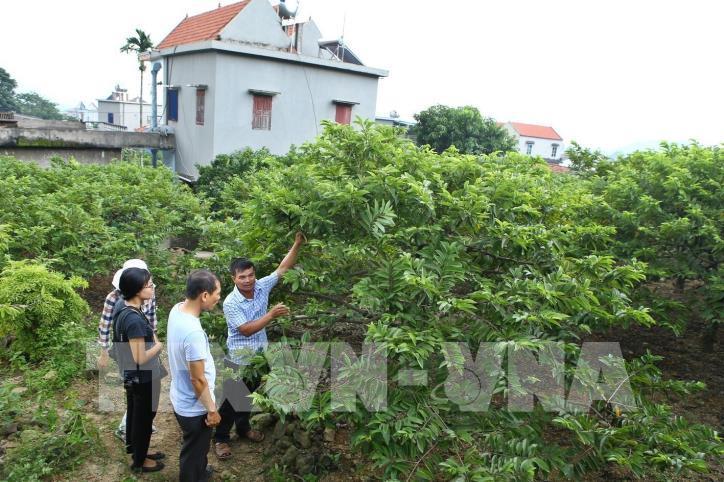 Ghé thăm những điểm đến hấp dẫn ở Bắc Giang - hình 18