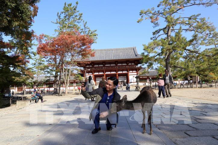 Độc đáo công viên Nara (Nhật Bản) - hình 1