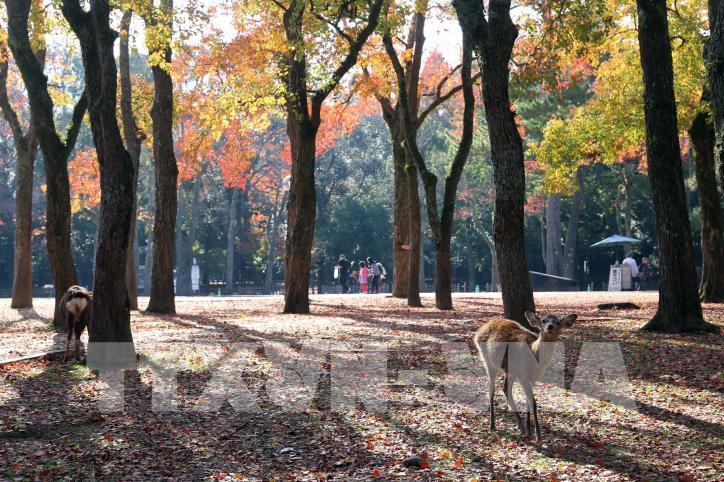 Độc đáo công viên Nara (Nhật Bản) - hình 2
