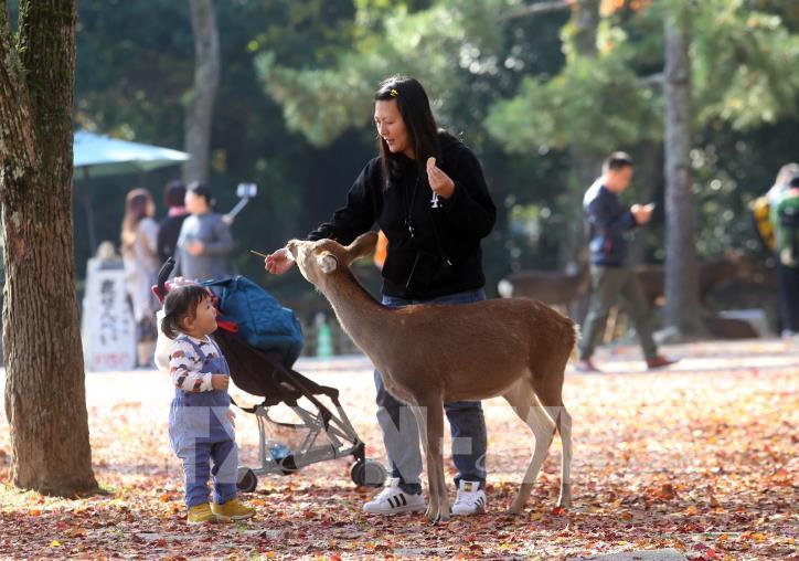 Độc đáo công viên Nara (Nhật Bản) - hình 3