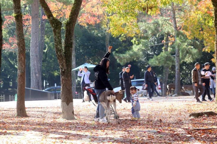 Độc đáo công viên Nara (Nhật Bản) - hình 4