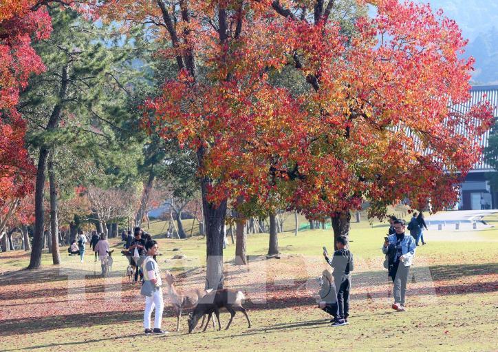 Độc đáo công viên Nara (Nhật Bản) - hình 5