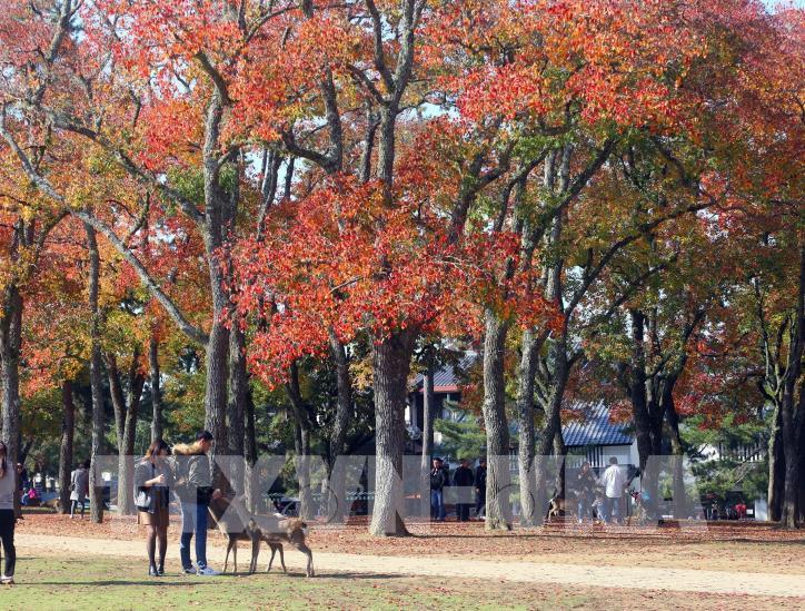 Độc đáo công viên Nara (Nhật Bản) - hình 7