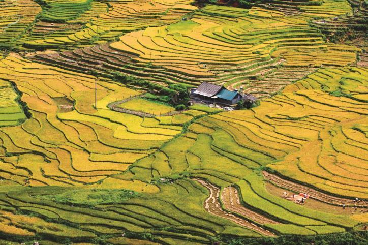 Việt Nam vẻ đẹp bất tận - hình 0