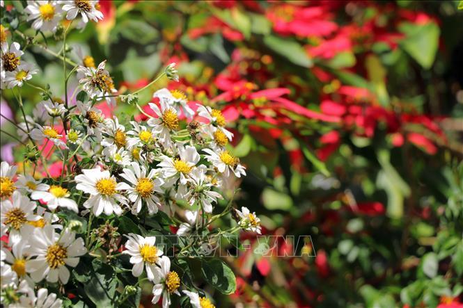 Rộn ràng sắc hoa dã quỳ ở Đà Lạt - hình 0