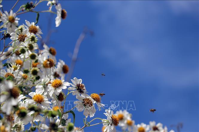 Rộn ràng sắc hoa dã quỳ ở Đà Lạt - hình 1