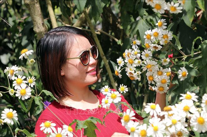 Rộn ràng sắc hoa dã quỳ ở Đà Lạt - hình 2