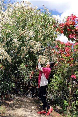 Rộn ràng sắc hoa dã quỳ ở Đà Lạt - hình 3