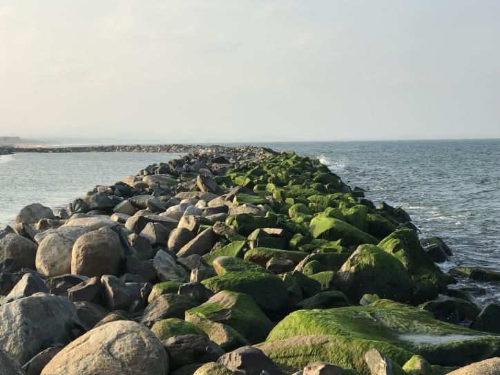 Đẹp ngỡ ngàng kè biển Đà Diễn - hình 0