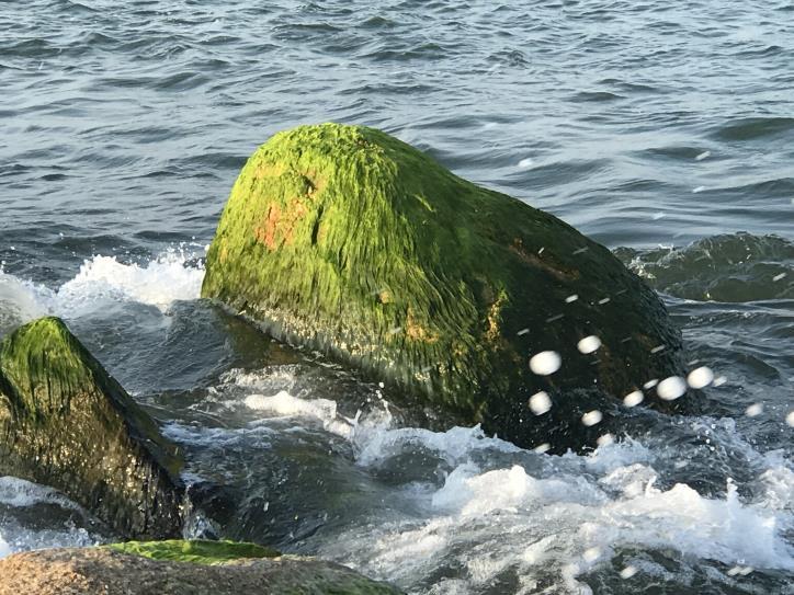 Đẹp ngỡ ngàng kè biển Đà Diễn - hình 1