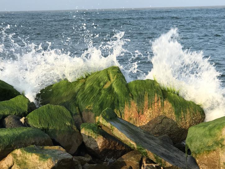 Đẹp ngỡ ngàng kè biển Đà Diễn - hình 2
