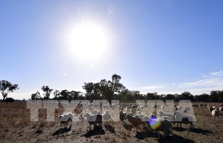 Australia đầu tư hơn 100 triệu USD cho nghiên cứu nông nghiệp