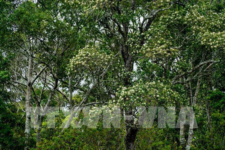 Hấp dẫn Công viên địa chất Đắk Nông - hình 8