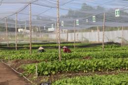 Phát triển bền vững kinh tế trang trại: Cần chính sách mới hiệu quả hơn
