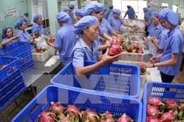 Xuất khẩu rau, quả tăng 10,3%