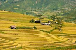 Nhật Bản sẽ thành lập doanh nghiệp sản xuất, kinh doanh lúa gạo tại Yên Bái