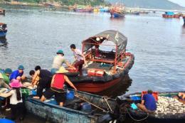 Lý giải nguyên nhân cá chết trên vùng biển Nghi Sơn (Thanh Hóa)