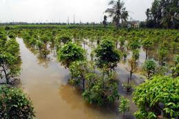 Triều cường lên cao làm vỡ đê bao sông Sài Gòn