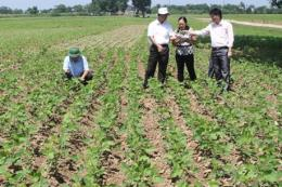 Hỗ trợ giống cây trồng cho 9 tỉnh