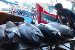 Để cá ngừ đại dương tiếp tục vươn xa