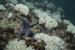 ADB sẽ hỗ trợ 5 tỷ USD cho các dự án kinh tế biển và bảo vệ đại dương
