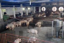 Bộ Nông nghiệp và Phát triển nông thôn chỉ đạo hỗ trợ tiêu thụ sản phẩm thịt lợn