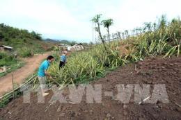 Phó Thủ tướng Trương Hoà Bình: Làm rõ thông tin báo chí đưa về phá rừng, cháy rừng