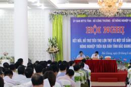 Tìm giải pháp hỗ trợ tiêu thụ lợn thịt cho người chăn nuôi Bắc Giang