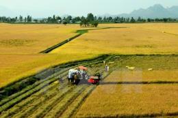 Trà Vinh chuyển đổi 7.900 ha đất trồng lúa không thuận lợi