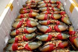 Giá cua biển tăng cao