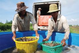 Nhiều mặt hàng thủy sản tăng giá mạnh