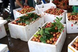 Hải Dương mời gọi doanh nghiệp đầu tư vào nông nghiệp