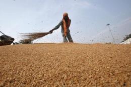 Giá lương thực thế giới tăng mạnh trong tháng 11