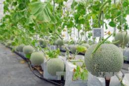 Thúc đẩy chuyển giao ứng dụng công nghệ cao trong nông nghiệp