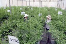 Đẩy mạnh ứng dụng khoa học công nghệ vào sản xuất nông nghiệp -Bài 1