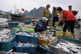 Cơ bản hoàn thành chi trả bồi thường thiệt hại do sự cố môi trường biển 4 tỉnh miền Trung