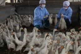 Trên 70% các bệnh truyền nhiễm ở người có nguồn gốc từ động vật