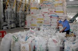 Giá lúa gạo có xu hướng tăng do nguồn cung khan hiếm