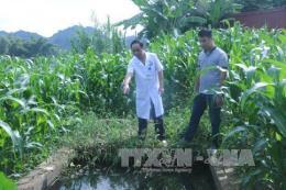 Nước thải của Trung tâm y tế huyện Ngân Sơn gây ô nhiễm