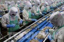 """Không tháo gỡ """"thẻ vàng"""", ngành thủy sản Việt Nam mất cơ hội xuất khẩu"""