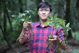 Chàng thạc sỹ trẻ đam mê với cây thuốc quý - Sâm Ngọc Linh