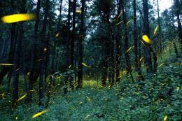 Rừng rậm của Mexico đứng trước nguy cơ bị
