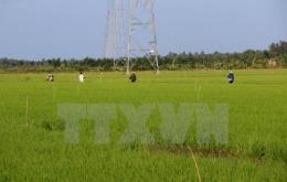 Minh bạch thị trường quyền sử dụng đất nông nghiệp