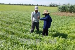 Bến Tre và TP.HCM chú trọng phát triển nông nghiệp gắn với chuyển giao công nghệ