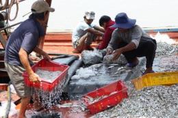 Phát triển bền vững ngành thủy sản - Bài 1: Tự ứng phó để duy trì sản lượng, chất lượng